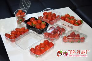 Fresh Strawberry Fruits