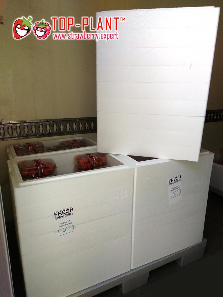 strawberry-styro-box4es-(1)
