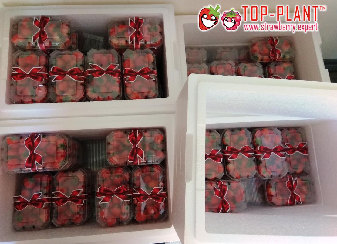 www.strawberry.e4xpert-(7)