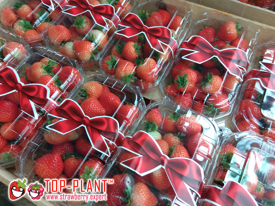 www.strawberry.expert-(5e)